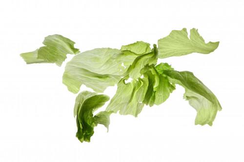 listiya-salata-sobaka-bezhit-nazapad-na-belom.jpg